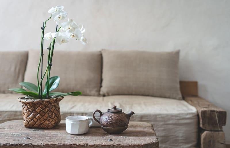 orquidea para decoracao